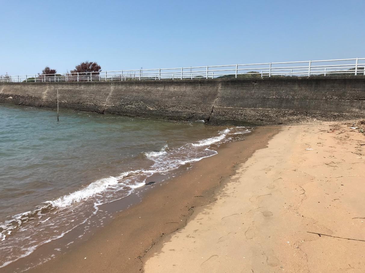 伊万里湾カブトガニ繁殖地