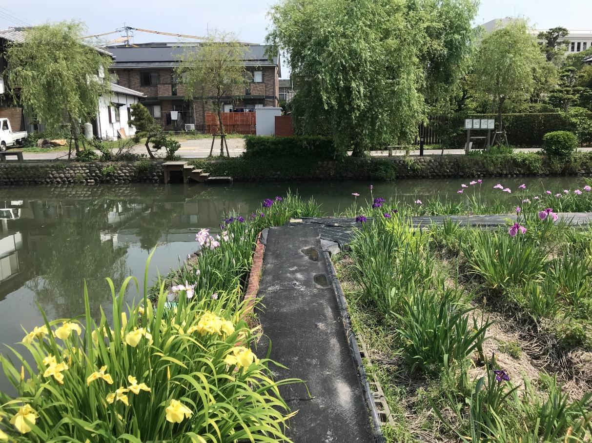 椛島菖蒲園(柳川市)は水路の角地にある