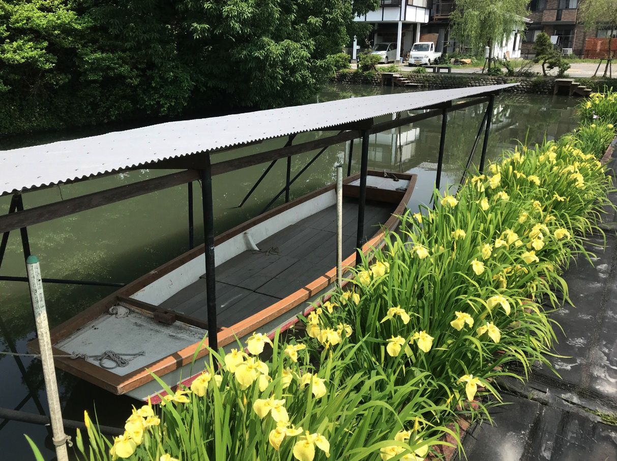 椛島菖蒲園(柳川市)とどんこ舟