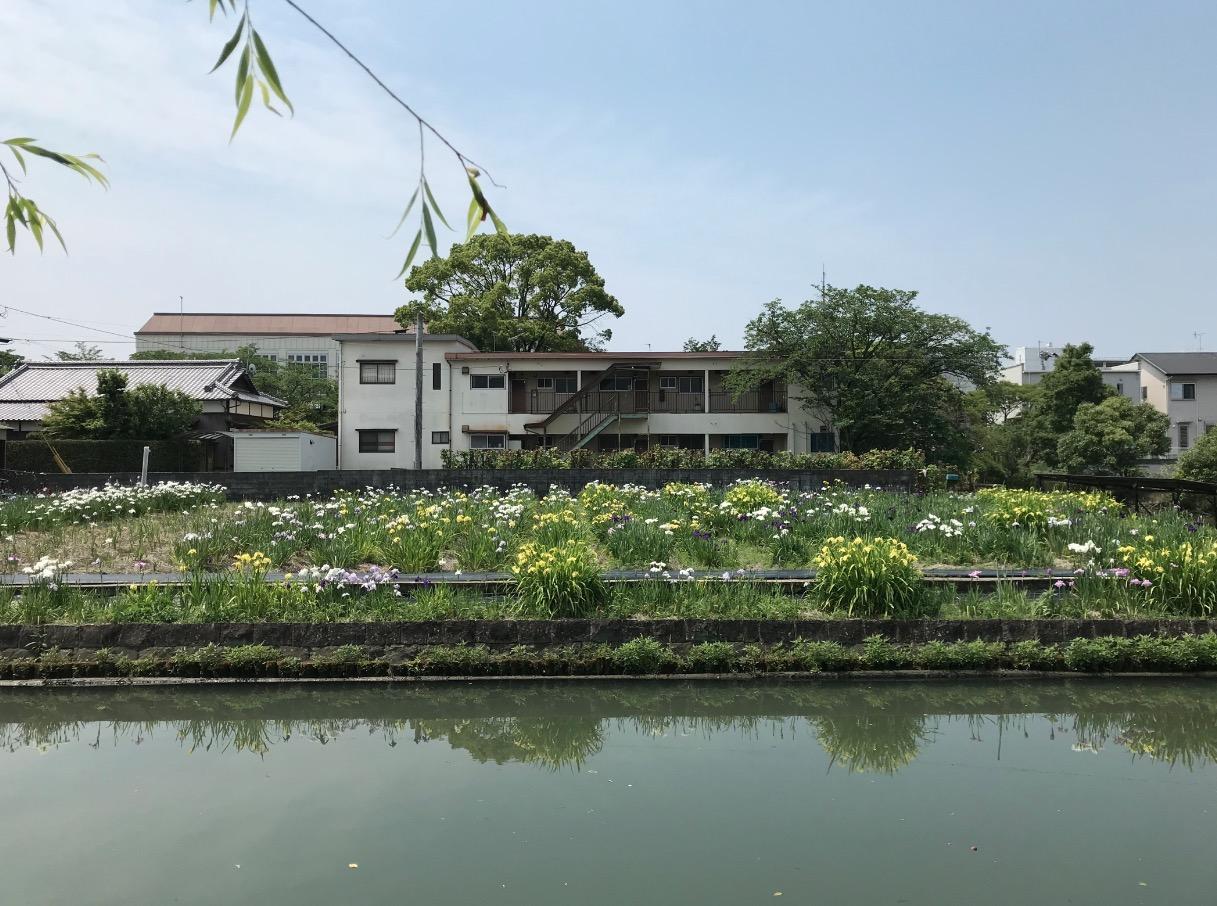 椛島菖蒲園(柳川市)を対岸から見る