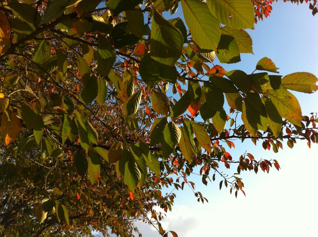 秋の日の出と赤っ恥