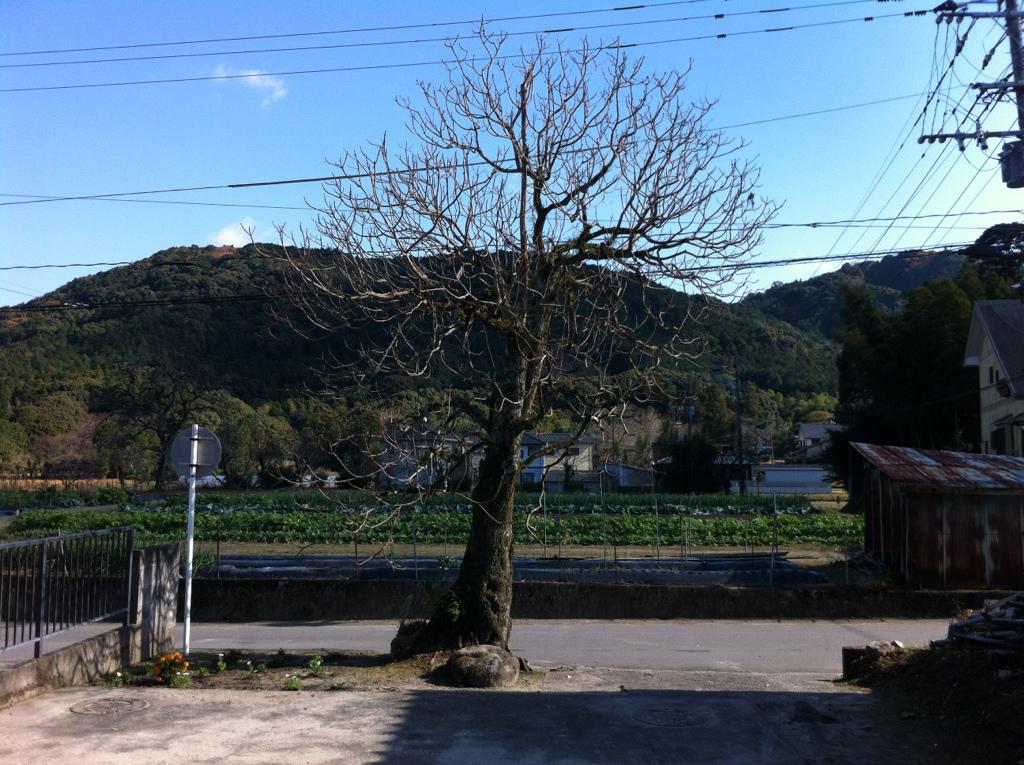 ふもとのうまみ:山田の阿弥陀堂