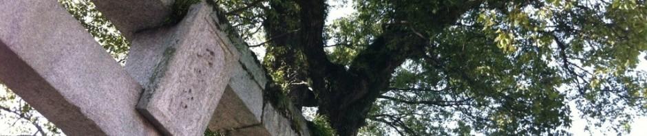 平野の大楠