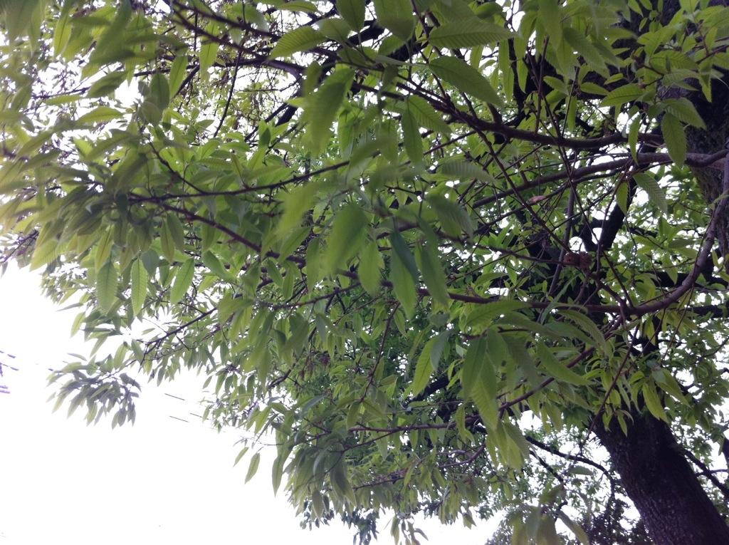 新たな緑に落ちる蔭:弥永・警弥郷三社巡り