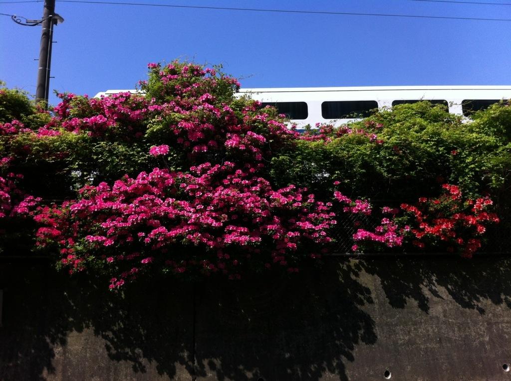 駅の向こうで花盛り