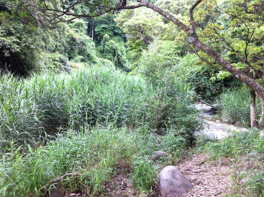 ここからホタルがよく見えます:中ノ島公園(那珂川町)