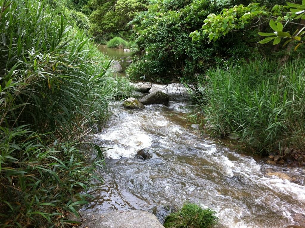 足元にご注意を:中ノ島公園(那珂川町)