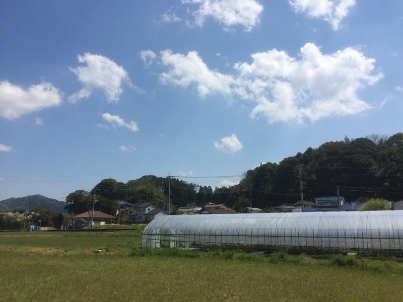 那珂川市の桜の穴場(とどろき橋河畔の桜)対岸の安徳台