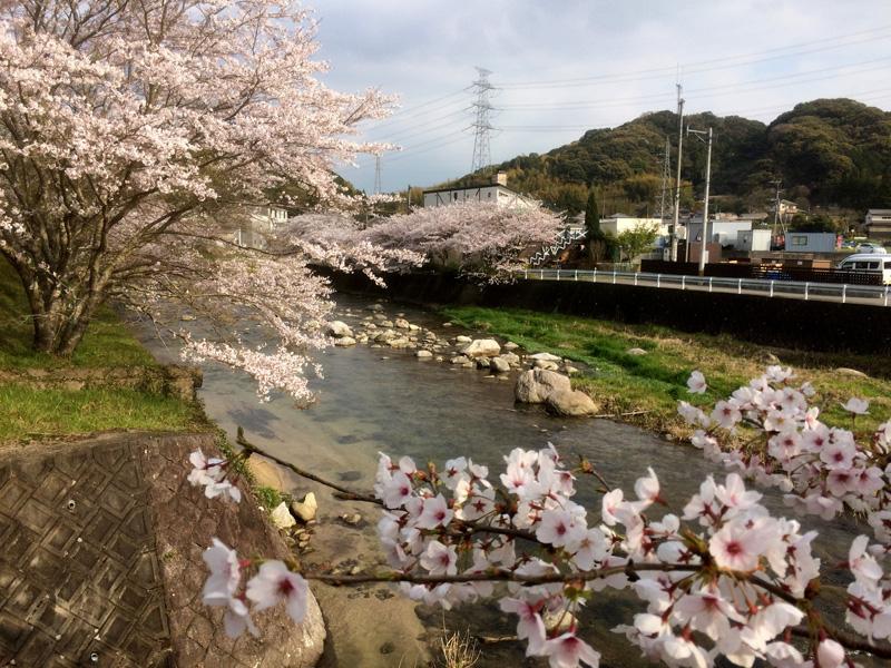 那珂川市の桜の穴場・寺瀬橋