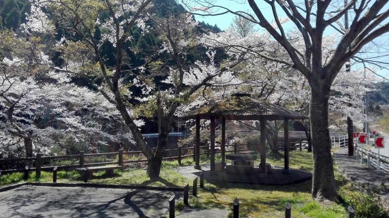 那珂川市内の桜の穴場〜南畑ダムとグリーンピア