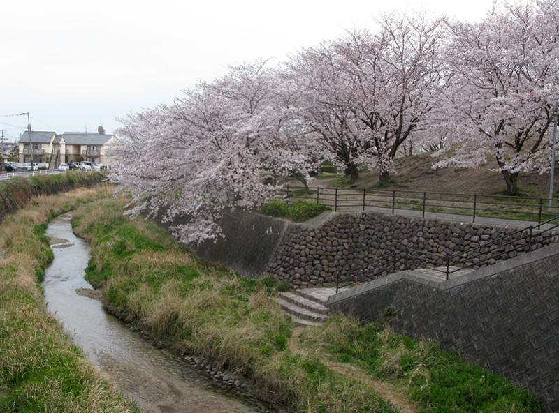 安徳公園の桜〜宗石橋から
