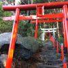 くぐりくぐって出会うのは:高津神社・2